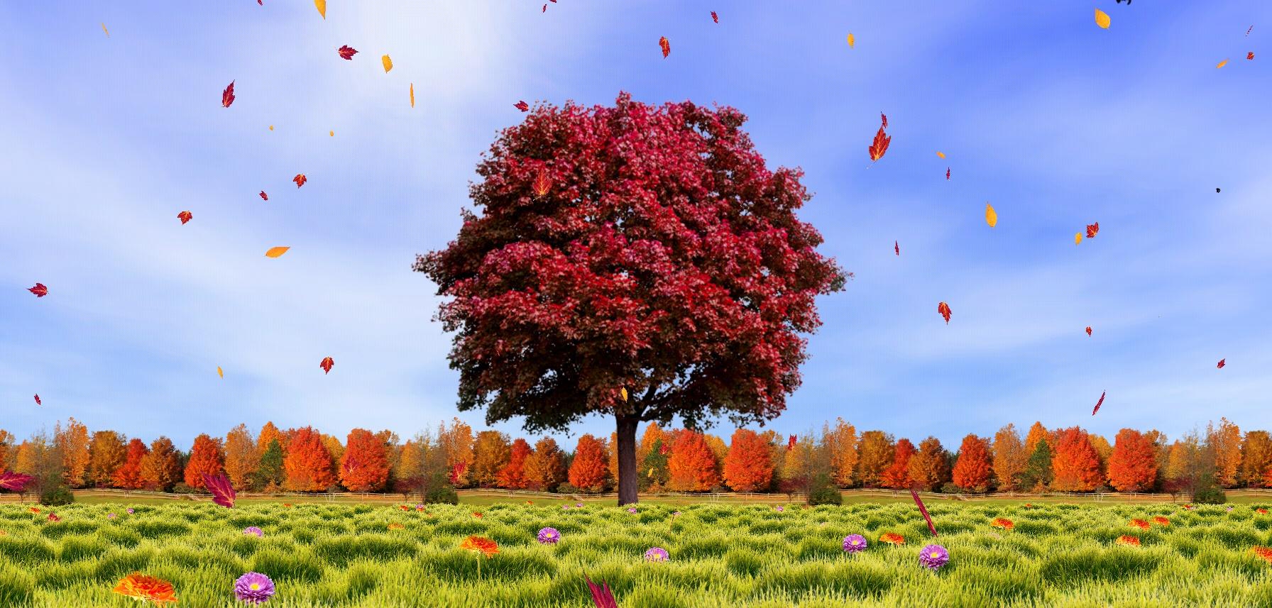 Autumn-trees-live-wallpaper